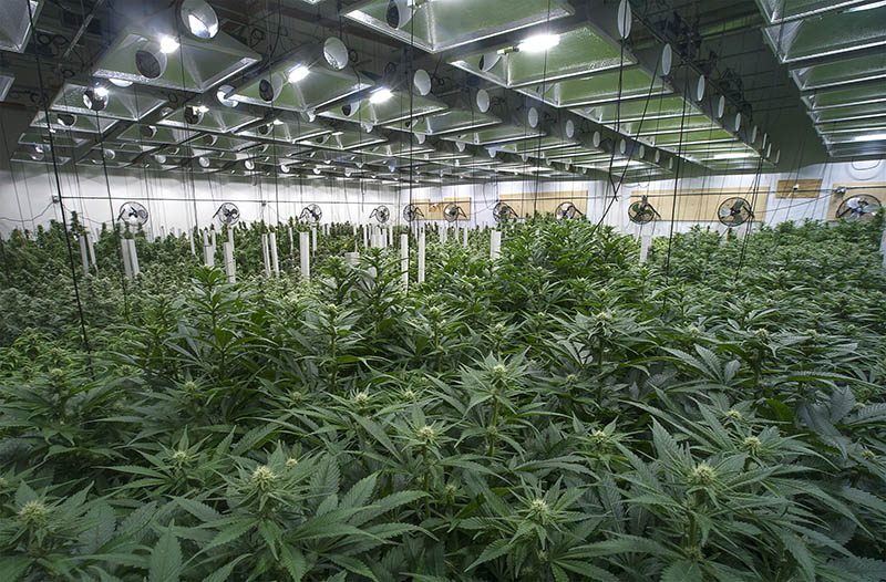 Why Polyurethane Closed-Cell Spray Foam Insulation Is Good For Your Indoor Cannabis Grow Farms Oregon